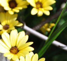 Summery Yellow Flowers Sticker