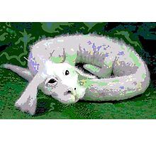 Falcor Resting from Flight Photographic Print