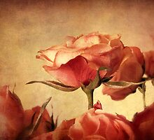 Gilded Roses by Jessica Jenney
