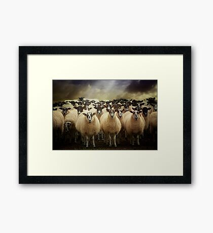 Sheepfest Framed Print