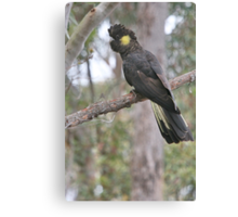 Yellow Tailed Black Cockatoo (Female)  Canvas Print