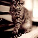World Class Pianist... by Zach Pezzillo