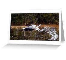 Sea Eagle 312 Greeting Card