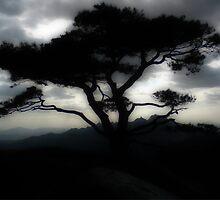 Tree, Dobongsan, S.Korea by David Mellor