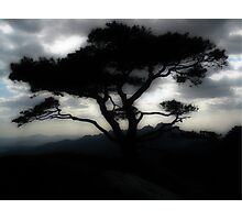 Tree, Dobongsan, S.Korea Photographic Print