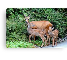 Mother Deer and Twin Fawns Canvas Print