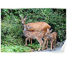 Mother Deer and Twin Fawns Poster
