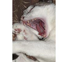 Fangs Photographic Print