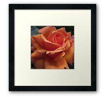 Orange Downton Abbey Rose Framed Print