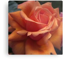 Orange Downton Abbey Rose Metal Print