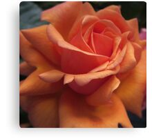 Orange Downton Abbey Rose Canvas Print