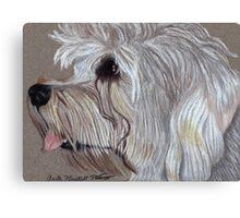 Dandie Dinmont Terrier Vignette Canvas Print
