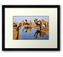 Camels and Reflections Framed Print