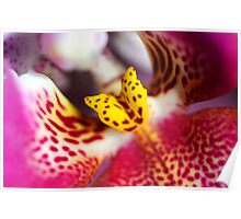 Flower macro orchid yellow pink Poster