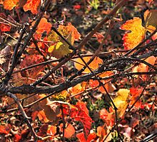 Fall Grape Leaves by Renee D. Miranda