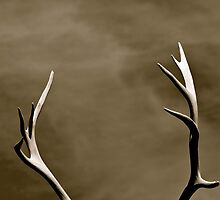 Antlers by kim powell