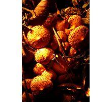 Fungi Light 1 Photographic Print