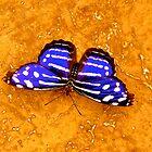 Butterfly by kim powell