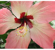 Hibiscus Flower Centre Photographic Print