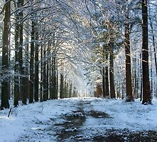 Lane through snowy woods  by steppeland