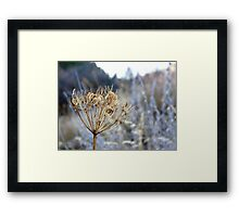 Ready for next year - dry seed stalks Framed Print