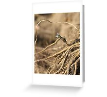 Two flies - 2015 Greeting Card