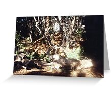 Fallen tree leafless branches and surrounding forest  Greeting Card