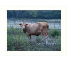 Cow in the backwoods of the Ozarks Art Print
