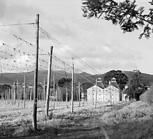 Hops Fields, Tasmania by Brett Rogers