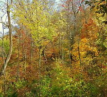 Fall coming to an End, Withrow Springs, Arkansas by David  Hughes
