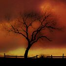 De,,,,, ciduous,,,,,, tree! by indianpeteee
