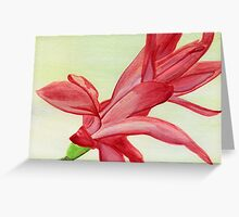 easter/christmas cactus Greeting Card
