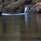 The Swimming Hole by Forrest Tainio