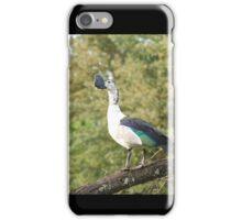 morning perch.  knob-billed duck. iPhone Case/Skin