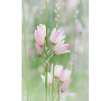 Soft Flowers Photographic Print