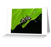 An Ant 2 Greeting Card