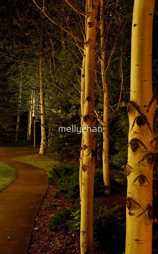 night aspens.  snowmass, colorado by mellychan