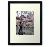 Autumn Cypress Framed Print