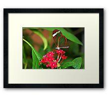 Flower Glasswing - Greta Oto Framed Print