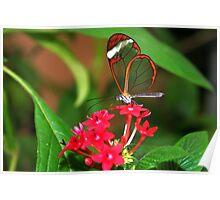 Flower Glasswing - Greta Oto Poster