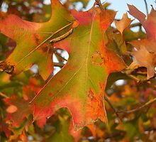 Red and Green Fall by NicholeHoag