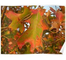 Red and Green Fall Poster