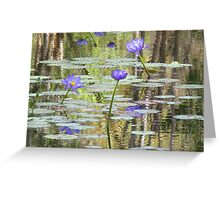 Water Lilies at Cape River Greeting Card
