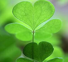 happy saint patrick's day!♣!♣!♣!♣!♣! by Iris Mackenzie
