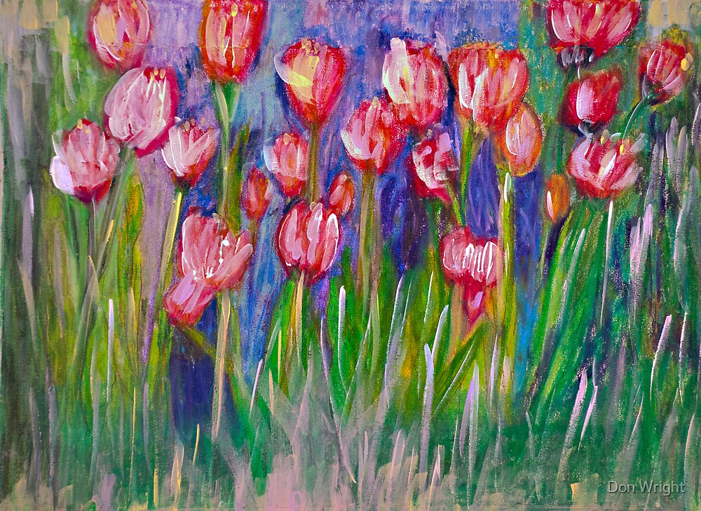 Tulip's Red & White by Don Wright