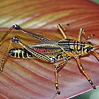 Eastern Lubber Grasshopper (Adult) by RebeccaBlackman