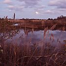The Moon Peeks Out Over the Succotash Salt Marsh by Jack McCabe