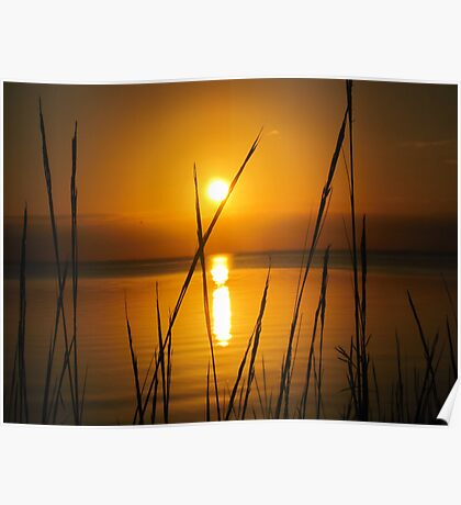 Florida golden sunset Poster