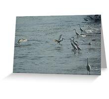 egrets hunting Greeting Card
