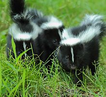 Little Stinkers by Bill McMullen
